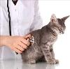 Ветеринарные клиники в Майском